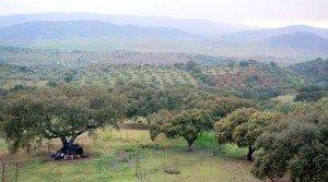 Villa con terreno de encinas en Zafra