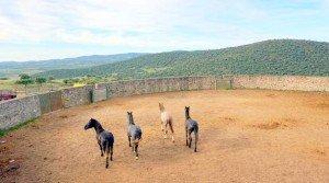 Finca rústica de dehesa y labor en Extremadura