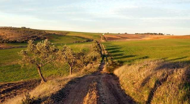 Finca agrícola y ganadera en la campiña sur de Badajoz