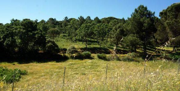 Finca de bosque mediterráneo con castaños, pinos y encinas
