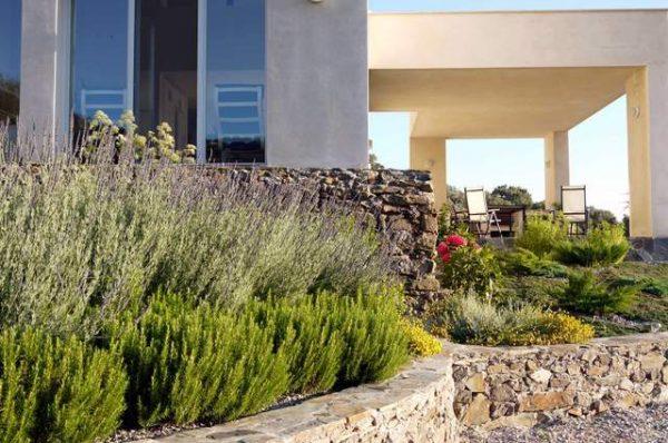 Jardín de la casa con plantas silvestre