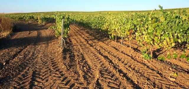Calles del viñedo en espaldera