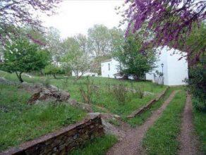 Terreno con árboles y casa de campo