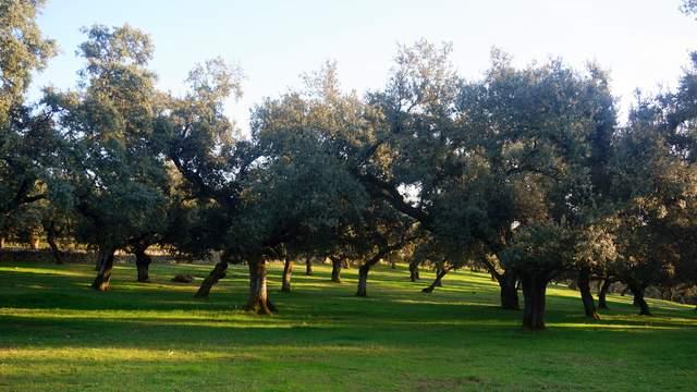 Dehesa pequeña en Extremadura