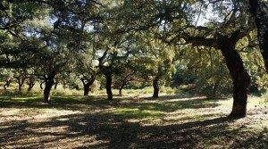 Finca rústica con corcho y regadío en Extremadura