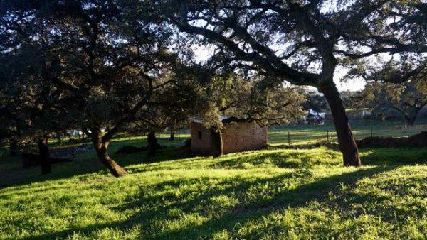 Casa de aperos entre encinas y alcornoques en la sierra de Huelva
