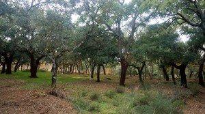 Finca de caza mayor y alcornocal en Extremadura