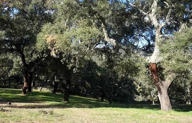 Finca de corcho en Extremadura