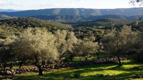 Paisaje de la Sierra de Aracena desde la parcela rústica