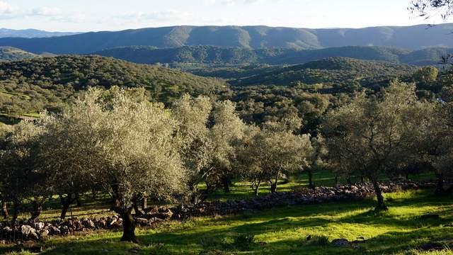 Paisaje de la sierra de Aracena desde la finca