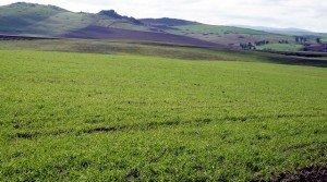 Alquiler de finca de regadío para olivos o almendros en Extremadura
