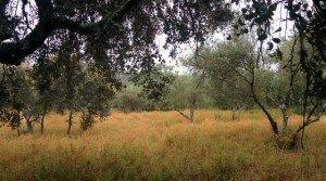 Parcela de alcornoques, olivos e higueras en la sierra de Aracena