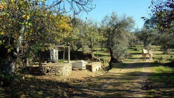Huerta con higueras, frutales y pozo artesanal