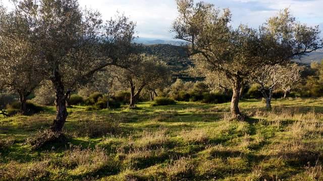 parcela-rustica-olivos