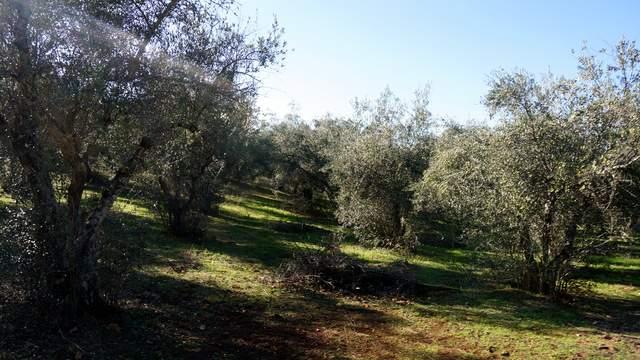 Terreno de olivos en Extremadura