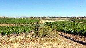 Finca rústica de viñedo y labor regadío en Extremadura