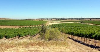 Finca con viñedo, tierra de labor y dehesa
