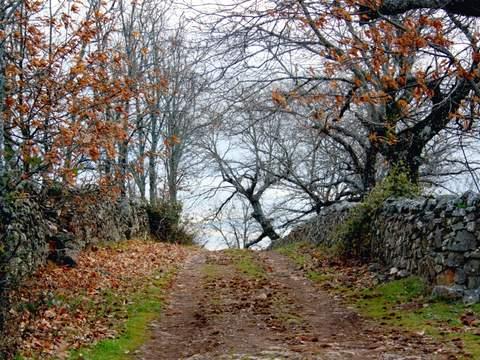 Finca de caza mayor en Cáceres, 1100 ha  con grandes zonas de robledal