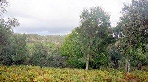 Ejemplares de alcornoques y castaños con la sierra de Aracena al fondo