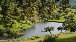 Finca rústica con encinas y alcornoques cerca del Parque Natural de Cornalvo en Extremadura
