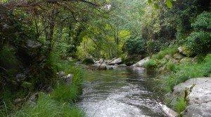 Finca rústica de 500 ha con coto de caza mayor en el Parque Sierra de Gredos