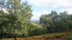 Vistas de la sierra de Aracena desde la finca rústica en venta