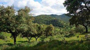 Gran finca en Extremadura: dehesa y labor