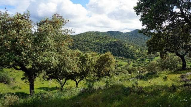 Dehesa de encinas y labor en Extremadura