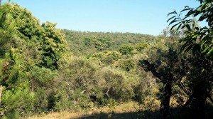 Vista de las fincas colindantes desde el terreno en venta