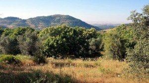Terreno de campo para edificar casa en Extremadura
