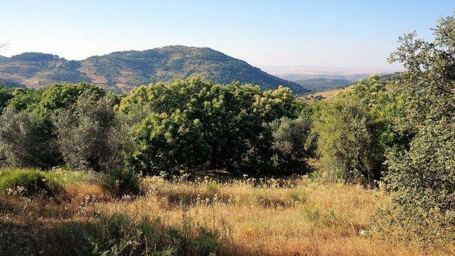 Terreno de campo de 5,2 hectáreas en Extremadura para edificar casa