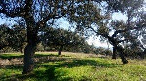 Dehesa de 250 hectáreas de buen encinar en el suroeste de Badajoz