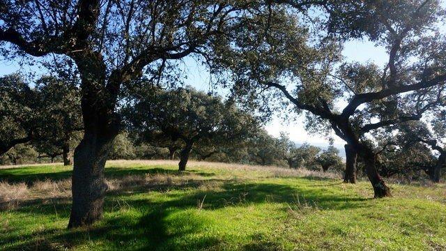 Dehesa de encinas en Badajoz