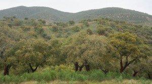 Finca cinegética y ganadera con cortijo en Extremadura