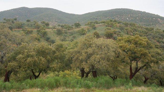 Finca cigenética y ganadera con cortijo habitable en Extremadura