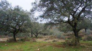 Finca mixta cinegética y ganadera en el noroeste de Badajoz