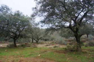 Finca cinegética y ganadera en Extremadura