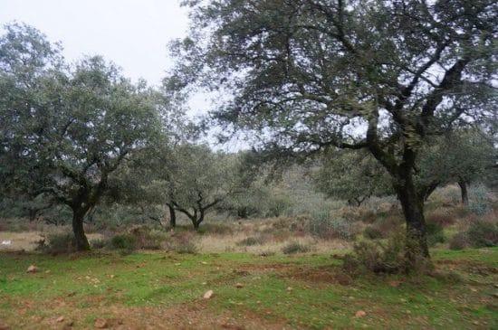 Finca mixta de 260 ha, cinegética y ganadera, en el noroeste de Badajoz