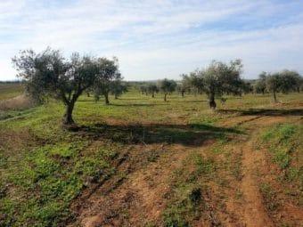 Finca agrícola de olivos y tierra de labor