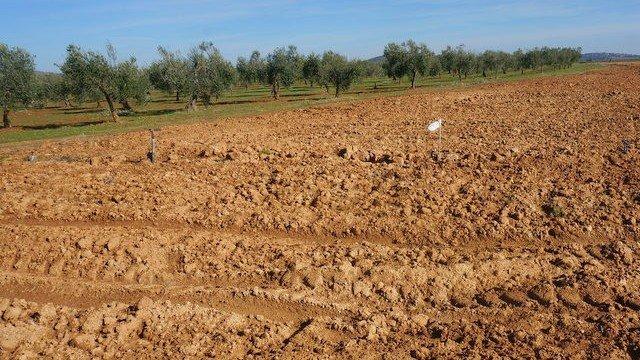 Finca de barbecho para plantación de viñedo en espaldera