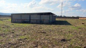 Cebadero de cerdos en venta con capacidad para 1150 plazas