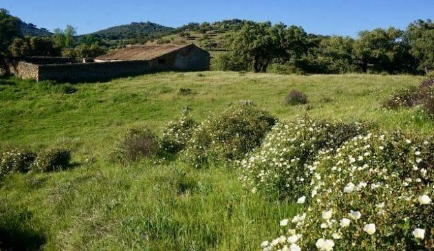 Finca rústica de 17 ha de encinar y alcornocal cerca de Aracena (Huelva)