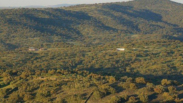 Dehesa de encinas en venta en el suroeste de Extremadura