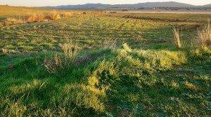 Finca de regadío en Portugal para olivos con agua del embalse de Alqueva