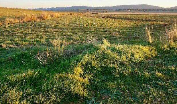 Finca de regadío de 150 ha en Portugal para olivos con agua del embalse de Alqueva
