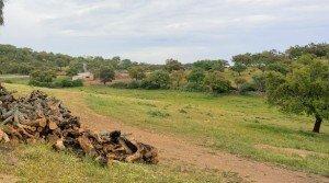 Dehesa de alcornoques y encinas en la sierra de San Pedro, Extremadura