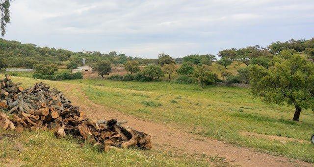 Dehesa de encinas y alcornoques en la sierra de San Pedro, Extremadura