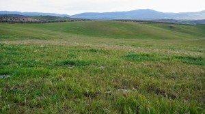 Finca de labor secano de 330 ha en la Campiña Sur de Extremadura