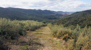 Finca ganadera con reforestación de encinas en el sur de Badajoz