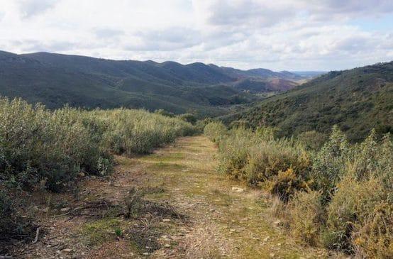 Finca ganadera de 110 ha con reforestación de encinas en el sur de Badajoz